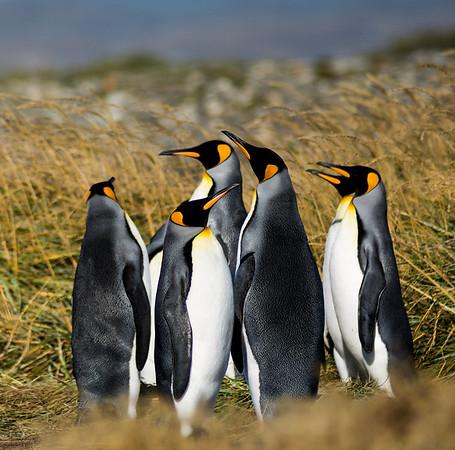 2014 Parque Pinguino Rey
