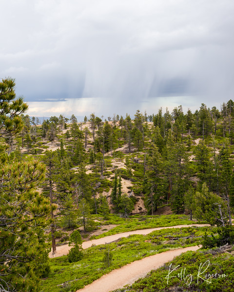 Bryce Canyon during a spring/summer storm.  No crowds, no one around, just us, the trees and nature...and the rain.
