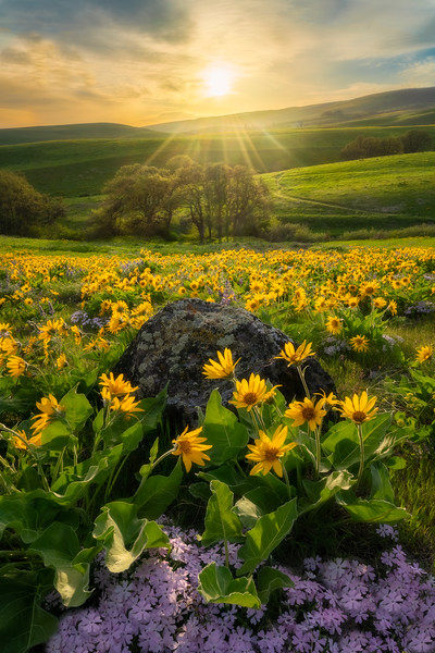 Hills of Green and Golden Rays