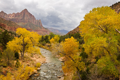 """Fall Colors of Zion"" - Zion National Park, UT"
