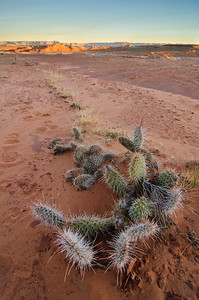 Cactus under a Lake Powell Sunrise