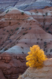"""Glowing at First Light"" - Grand Staircase Escalante National Monument, UT"