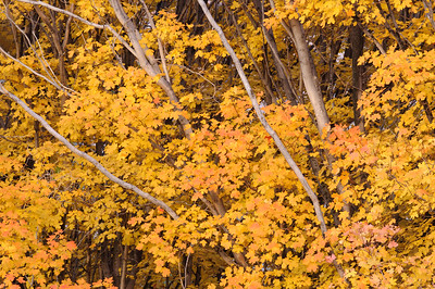 """Fall Color Intimate"" - Zion National Park, UT"