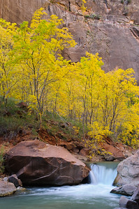 """Colors in the Narrows"" - Zion National Park, UT"