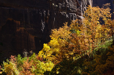 """Rainbow of Trees"" - Zion National Park, UT"