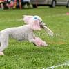 UpDog Challenge - Sunday, Aug. 30, 2015 - Frame: 4070