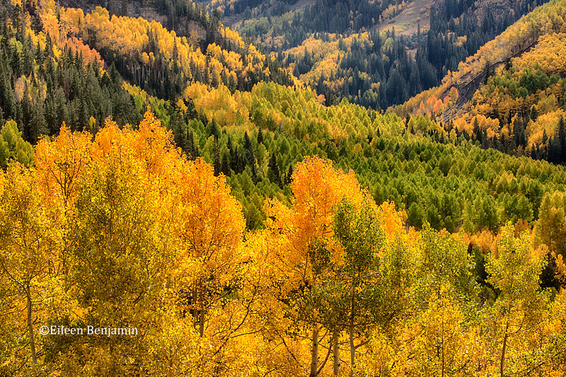 Telluride's Fall Colors
