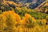 Telluride's Fall Colors