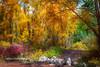 McClure Pass Fall Colors