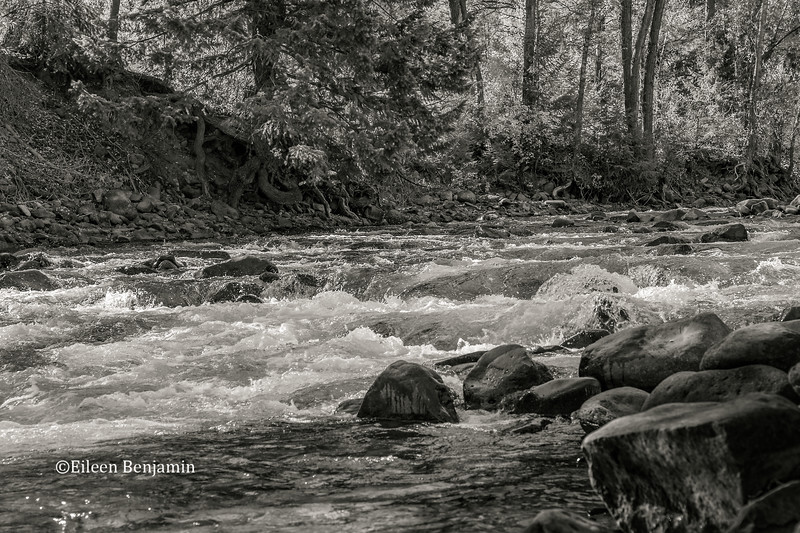 Crystal River in BW