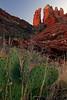 Butte & Cactus 1