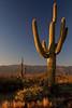 Cactus & Mountain 1