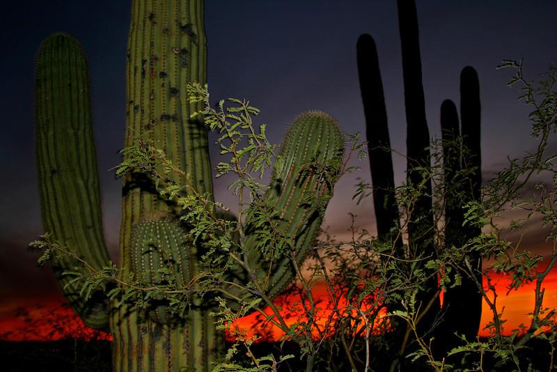 Cactus Sunset 6