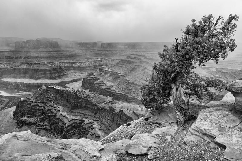 Canyonlands Mist