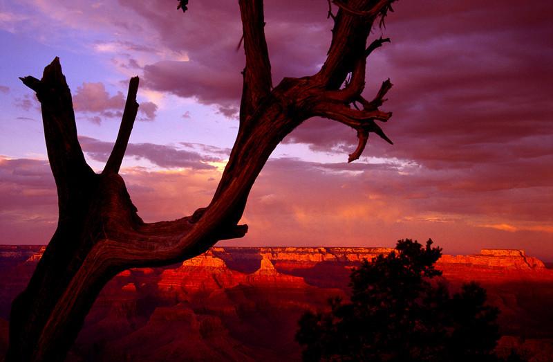 Grand Canyon Tree Sunset