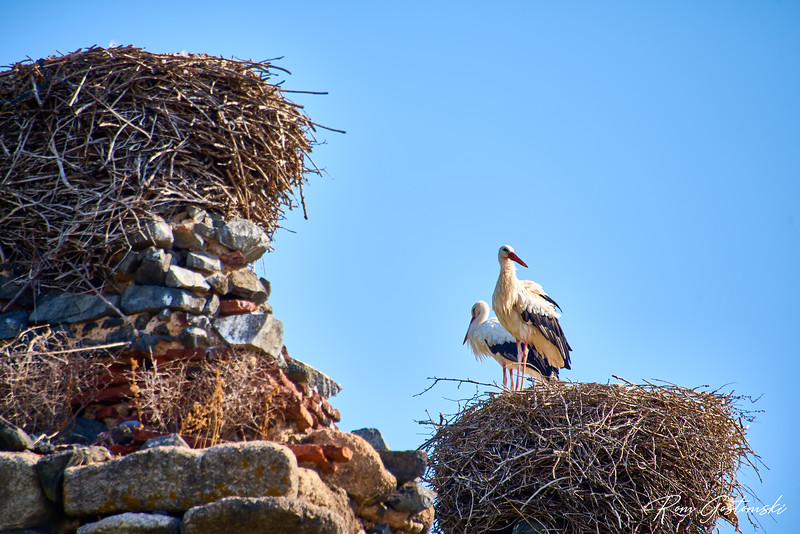 Stork´s nest on top of the aquaduct ruins