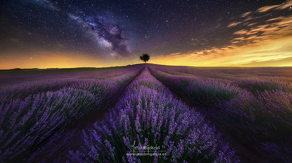 Lavender Field at Night - Guadalajara
