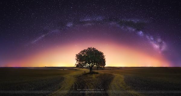 The lone Tree - Toledo