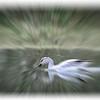 borisdatnow_See The Motion