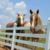 Horses outside monastery