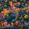 Autumn Lasso