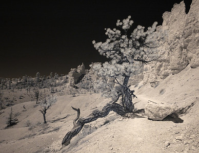 Infrared photo at Bryce Canyon National park