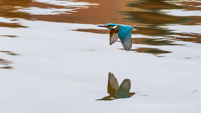Kingfisher at Speed!