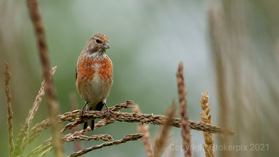 Linnet Poses for a picture