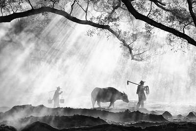 Farmers with Water Buffalo