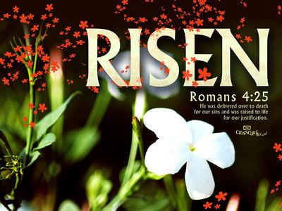 "He is not here, He has Risen, just as He said.                           ""HE'S ALIVE"" Matthew 28:6 John 11:25"