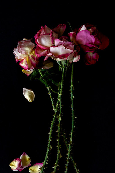Rose # 3