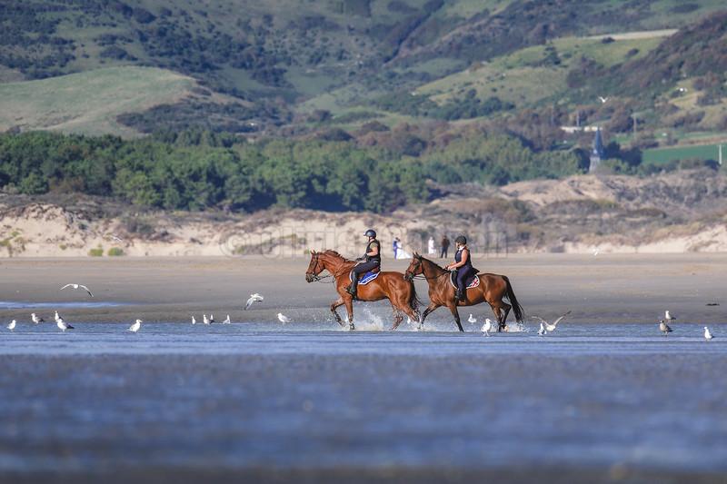 Equitation à la pointe Nord © 2020 Olivier Caenen, tous droits reserves