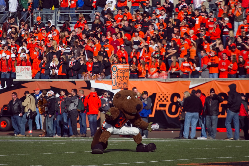"""Benny the Beaver"" The Oregon State Univiersity Mascot pumps up the crowd Prior to the 114th annual Civil War. UO Defeated OSU 37-20 in the game at Reser Stadium in Corvallis Oregon."