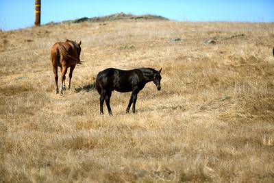 Two Horses Meyers Grade 862A6958.jpg