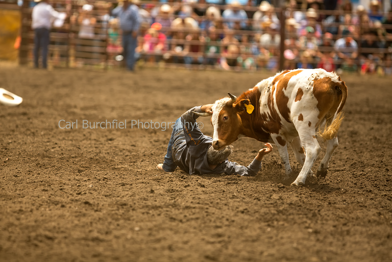 Duncan Mills Rodeo June 27, 2015