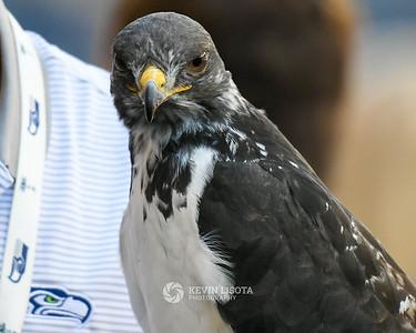 Taima the Hawk