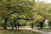 Sentier couvert de chênes