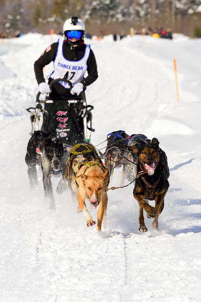 3 Bear Sled Dog Races 2020_14