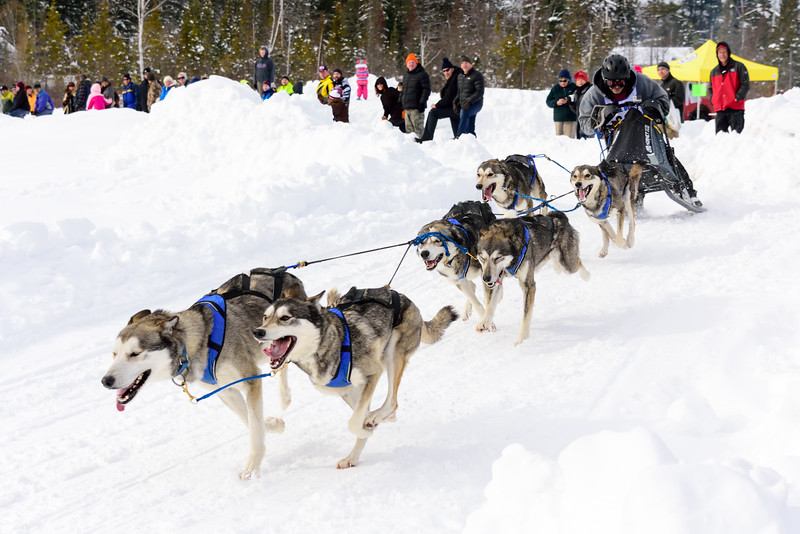 3 Bear Sled Dog Races 2020_21