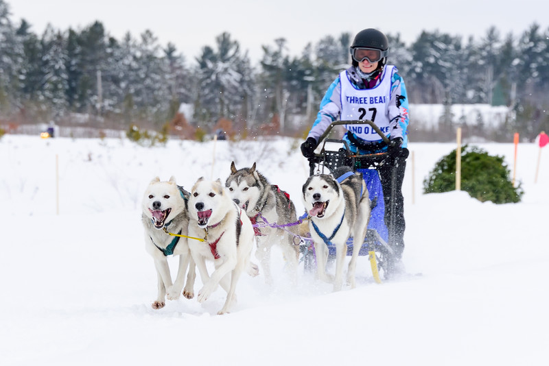 3 Bear Sled Dog Races 2020_10