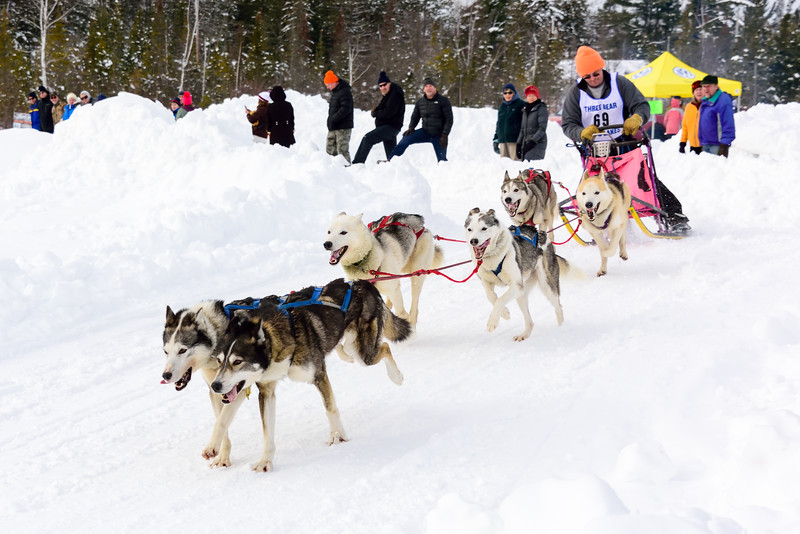 3 Bear Sled Dog Races 2020_25