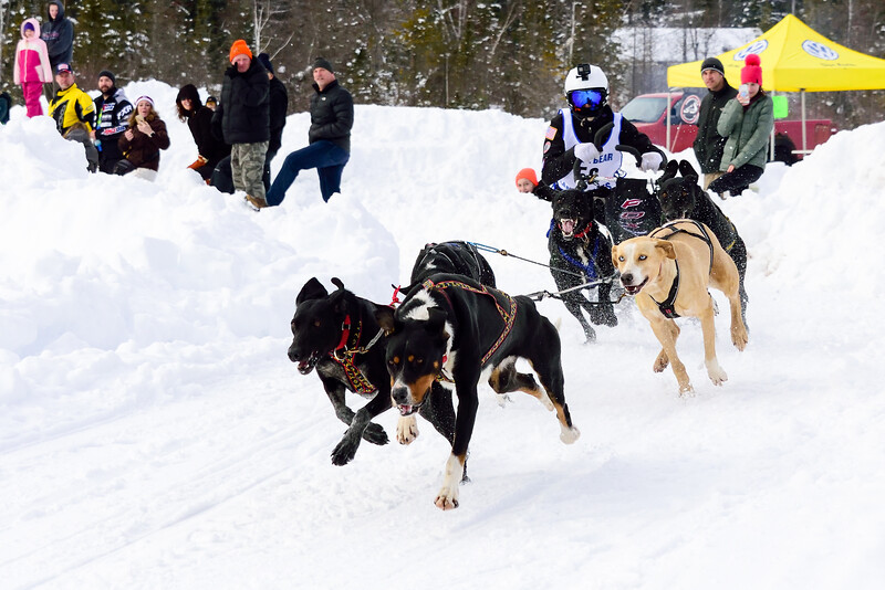 3 Bear Sled Dog Races 2020_20