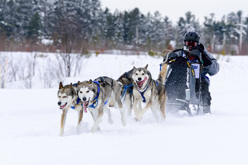 3 Bear Sled Dog Races 2020_09