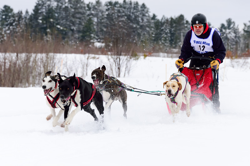 3 Bear Sled Dog Races 2020_07