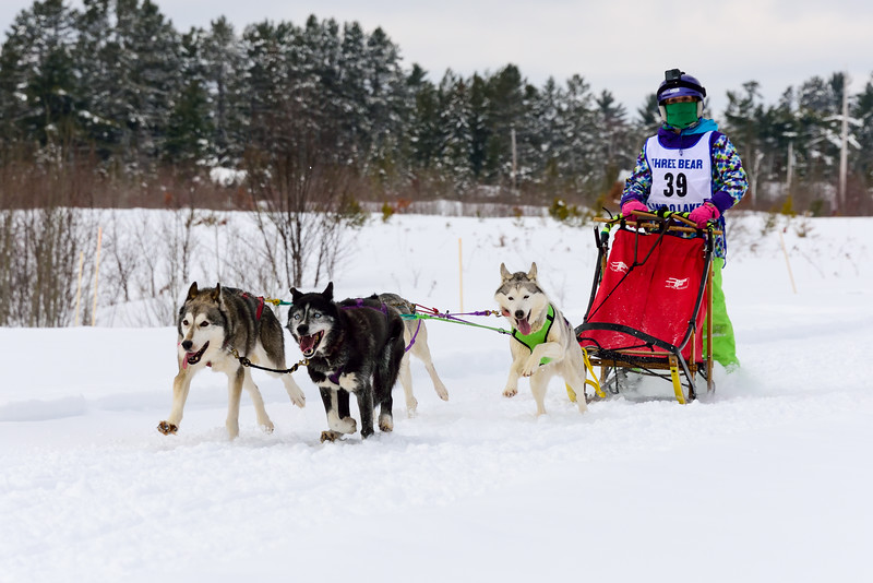 3 Bear Sled Dog Races 2020_12