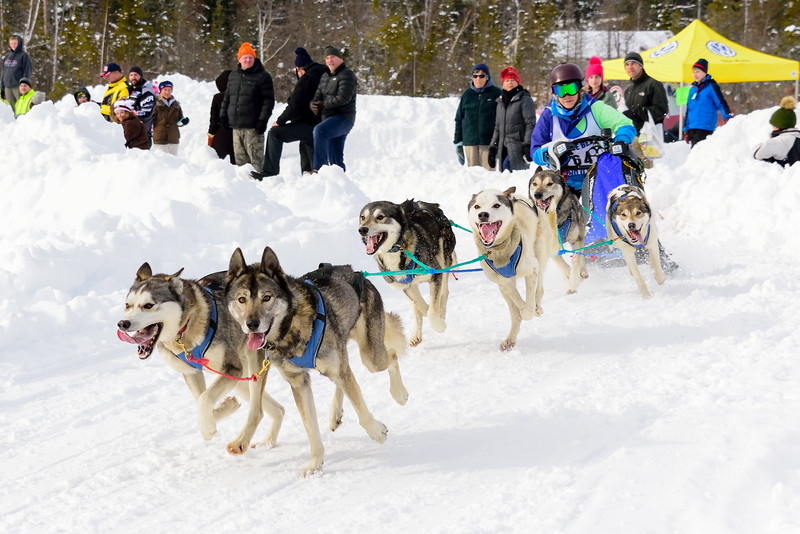 3 Bear Sled Dog Races 2020_22