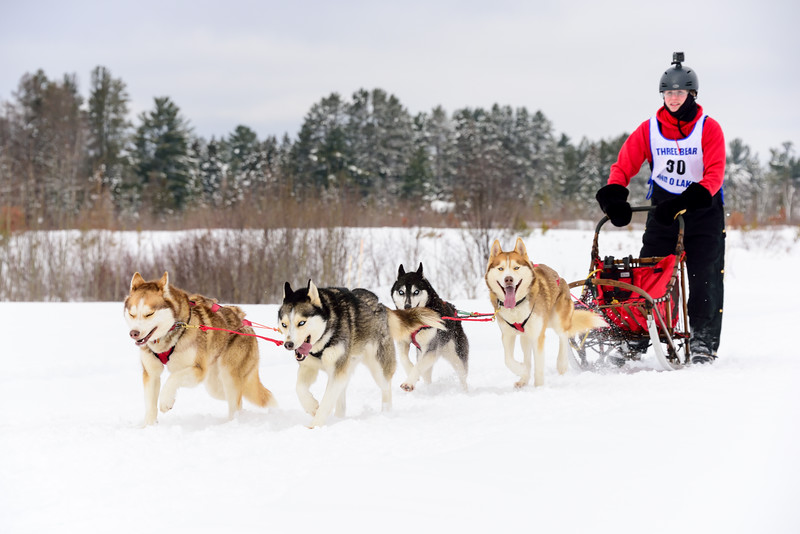 3 Bear Sled Dog Races 2020_11