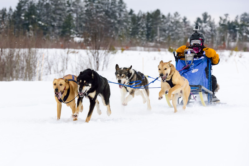 3 Bear Sled Dog Races 2020_08