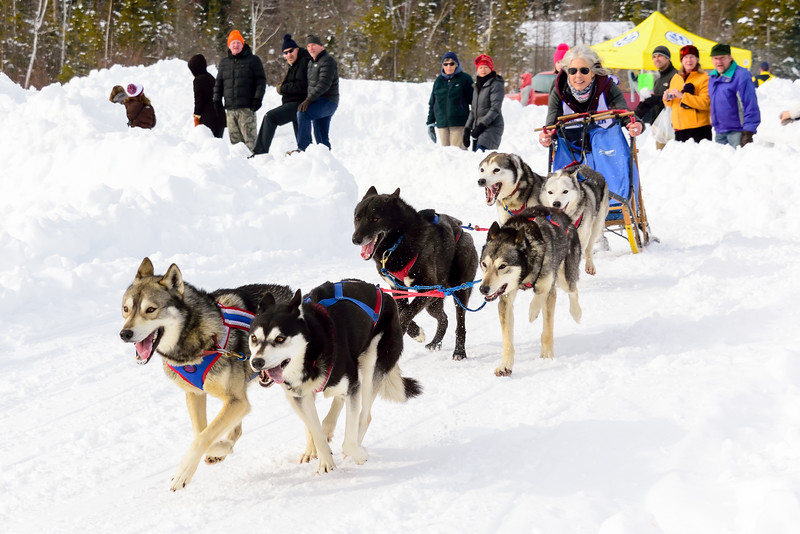 3 Bear Sled Dog Races 2020_24