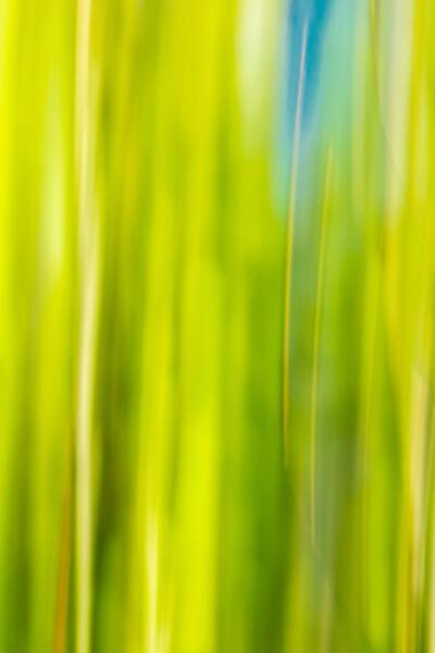 Spring Grass 2